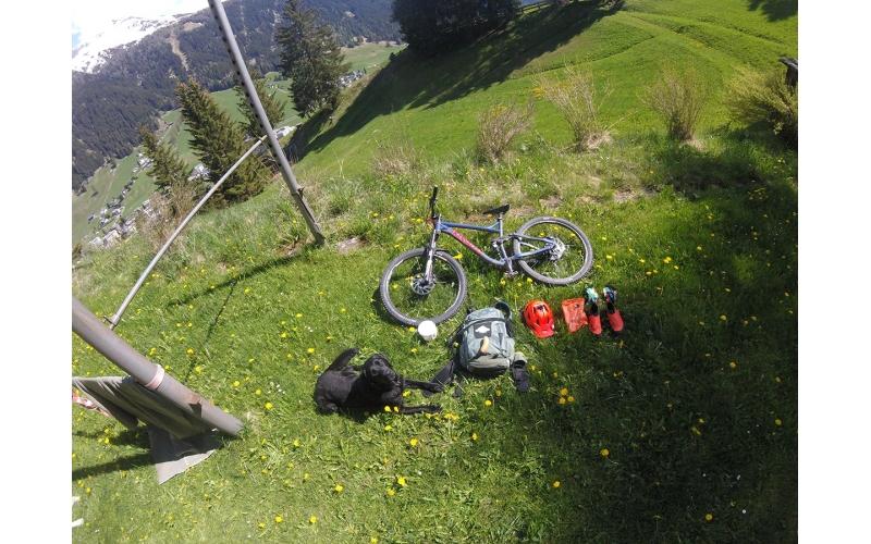 Trail Dog Davos