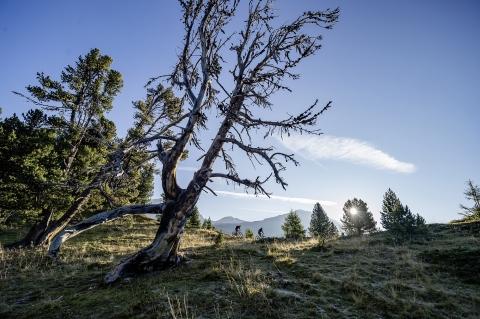 Alp da Munt (Val Müstair)