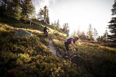 Singletrail durch Alpenrosen