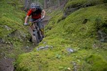 Moos-Trail