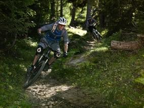 Wald-Trail