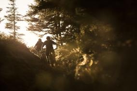 Singletrail im Wald im Abendlicht